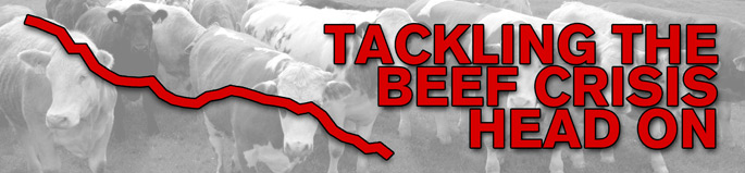 ICSA Action on Beef Crisis