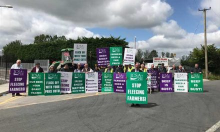ICSA PROTEST ELECTRONIC TAGGING FOR LAMBS AND CLEAN SHEEP UNCERTAINTY AT DEPARTMENT HQ