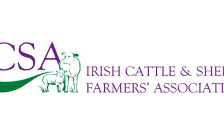 Cattle and Sheep Prices 19 October 2021