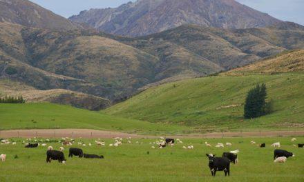 NO AMBITION IN PILOT AGRI-ENVIRONMENT SCHEME – ICSA