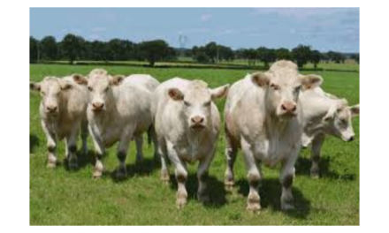 ICSA REJECTS DAFM DEFENCE OF TB HERD HISTORY RISK STATEMENTS