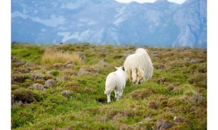 NEW LIVESTOCK PROTECTION LEGISLATION REQUIRED TO STAMP OUT DOG ATTACKS
