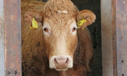 ICSA SAYS REGULATOR ONLY SOLUTION TO LACK OF PROGRESS AT BEEF TASKFORCE