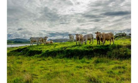 INCREASED BEEF PRICES AVAILABLE AS SUPPLIES REMAIN SCARCE