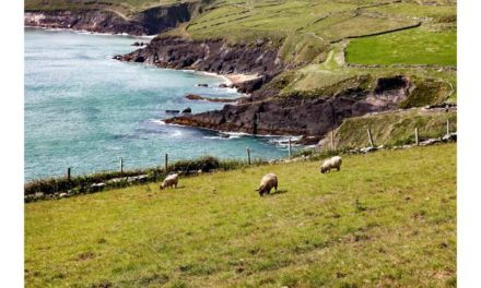 HUGE VOLUMES OF IMPORTED LAMB UNDERMINING IRISH PRODUCERS