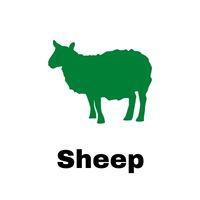 Sheep Sector ICSA
