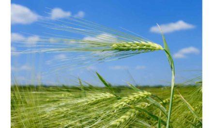 SUPPORT NEEDED FOR TILLAGE FARMERS AS FERTILISER PRICES SOAR