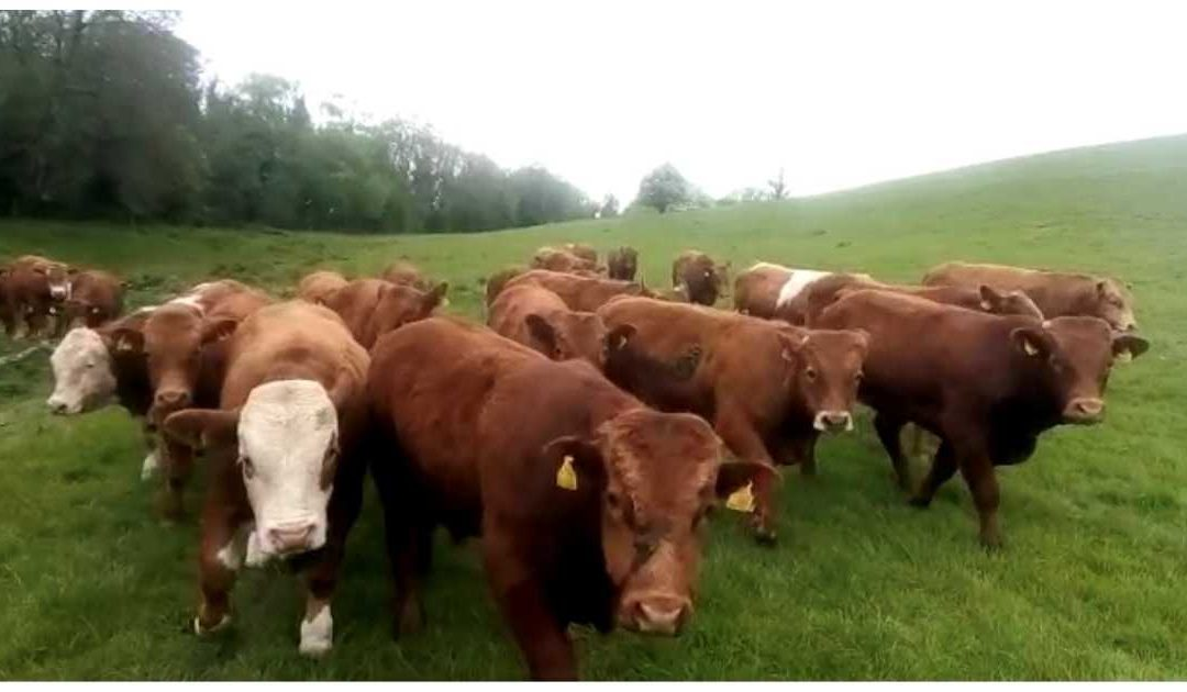 MINISTER MUST SUPPORT BEEF FINISHERS WITH SPECIFIC CAP PAYMENT