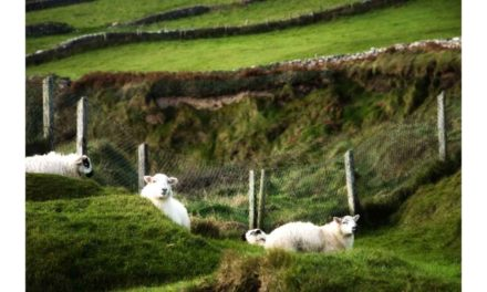 CATTLE AND SHEEP FARMERS MUST BENEFIT FROM INCREASED FUNDING FOR ORGANICS SCHEME